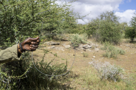 John Ndlovu holds a wire snare of the sort often found on the land, used to trap small game, such as impala
